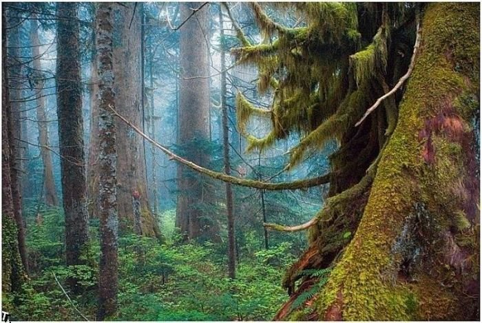 beautiful_forests_14 (700x469, 111Kb)
