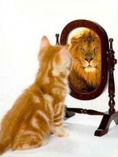 зеркалка льва (240x320, 19Kb)