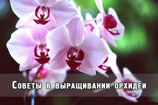 5640974__fTmaqJvxOI (604x403, 50Kb)