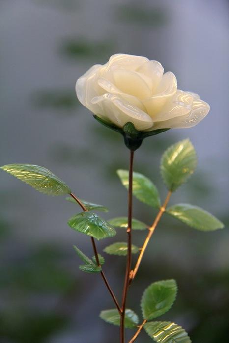 белая роза1 (466x700, 54Kb)