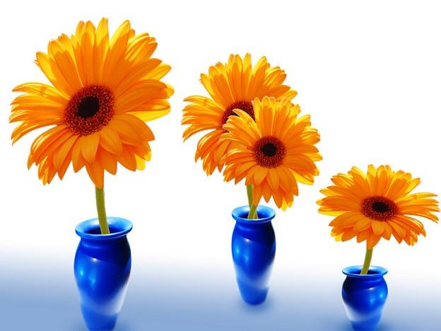 ваза цветы 19 (624x468, 226Kb)