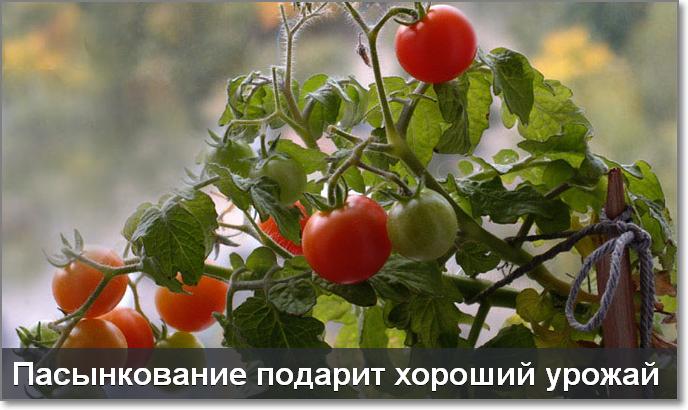 5177462_Image_4_2_ (688x410, 464Kb)