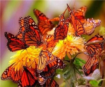 птицы и бабочки/3424885_0_b_1111 (360x298, 59Kb)