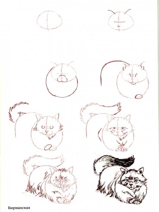 Как рисовать карандашами кошку