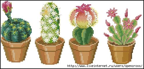 4 Cactuses 2 (495x240, 120Kb)
