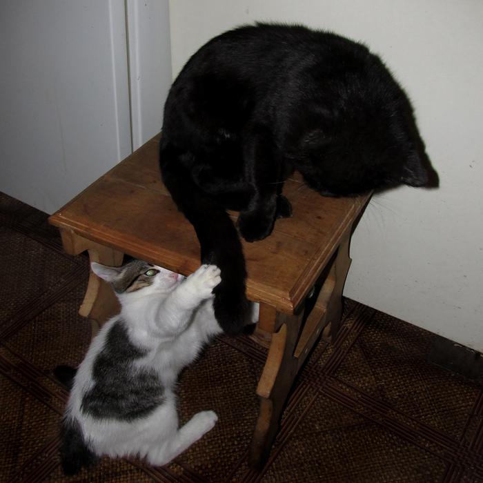 котёнок достаёт кота/683232_izya_begemot800 (700x700, 234Kb)