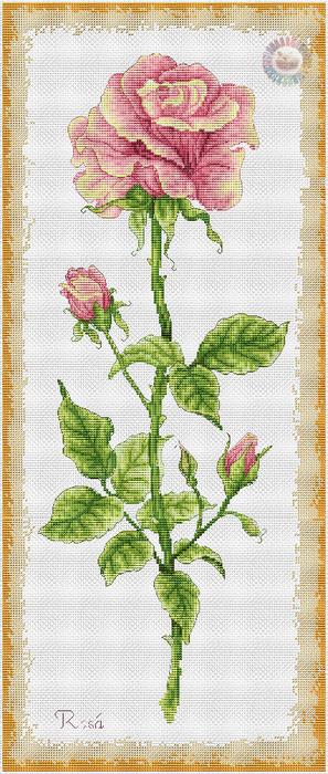 Rosa (297x700, 328Kb)