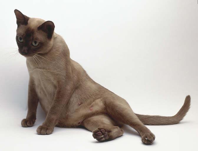 кошка (672x512, 21Kb)