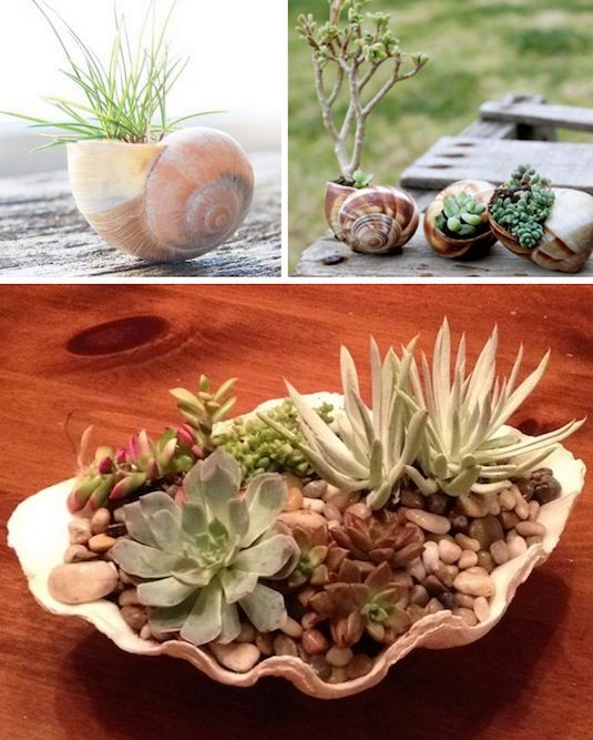 24-Creative-Garden-Container-Ideas-Use-shells-for-small-plants-22 (535x667, 334Kb)
