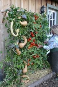 вертикальное садоводство (200x300, 86Kb)