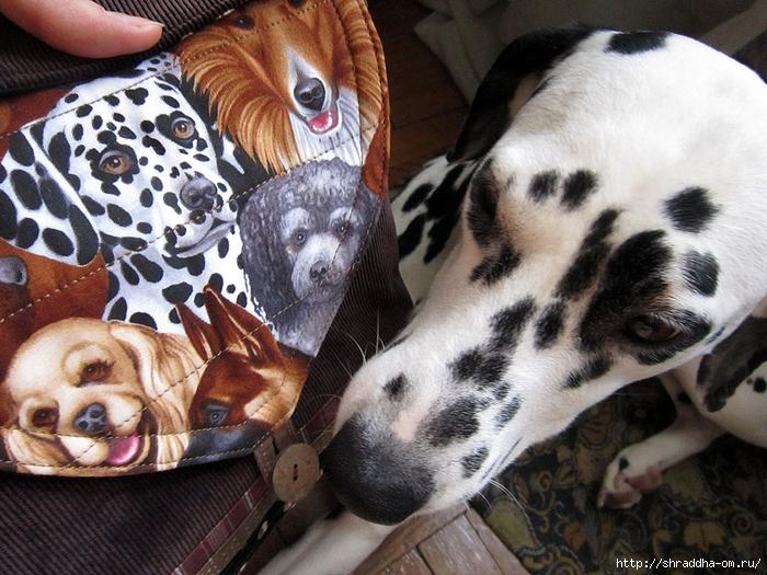 Собако-сумка (1) (700x525, 330Kb)