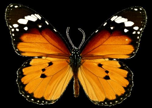 бабочка0 (500x355, 222Kb)