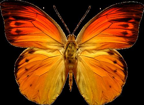 бабочка13 (500x365, 268Kb)
