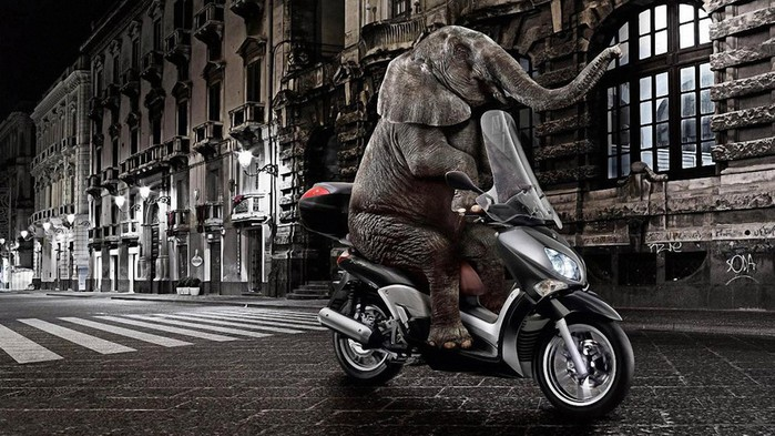 Funny-Elephant-Riding-Motorcycle-Wallpaper (700x393, 116Kb)