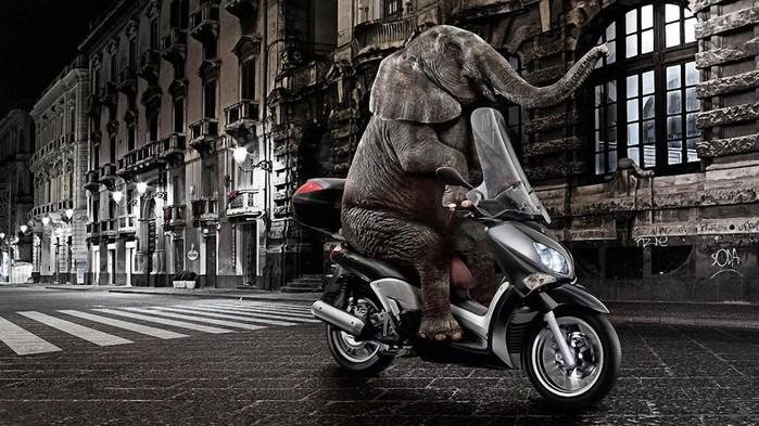 Funny-Elephant-Riding-Motorcycle-Wallpaper (700x393, 116Kb)
