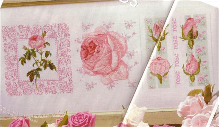 розы разные - Самое интересное