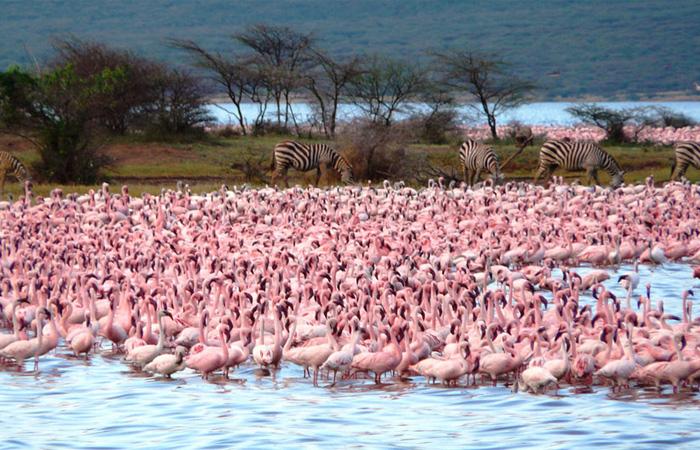 Миллион розовых фламинго2а (700x450, 402Kb)