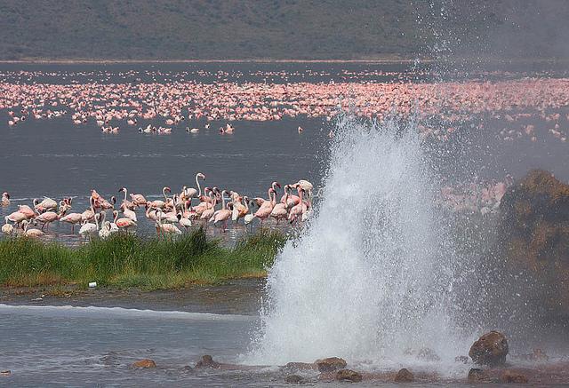 Миллион розовых фламинго12 (640x437, 395Kb)