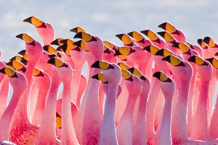 Миллион розовых фламинго14 (700x466, 429Kb)