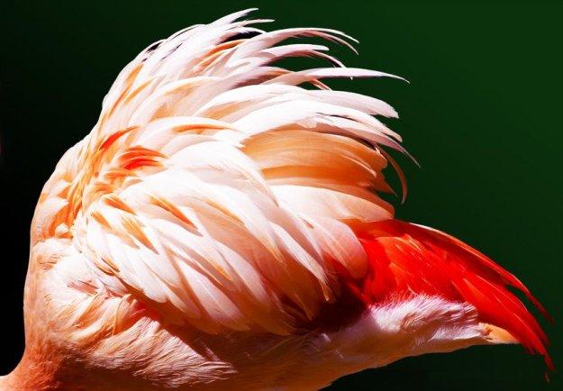 Миллион розовых фламинго16 (625x434, 211Kb)