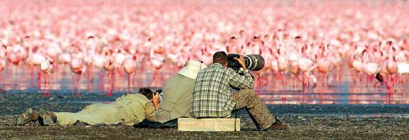 Миллион розовых фламинго19 (590x202, 138Kb)