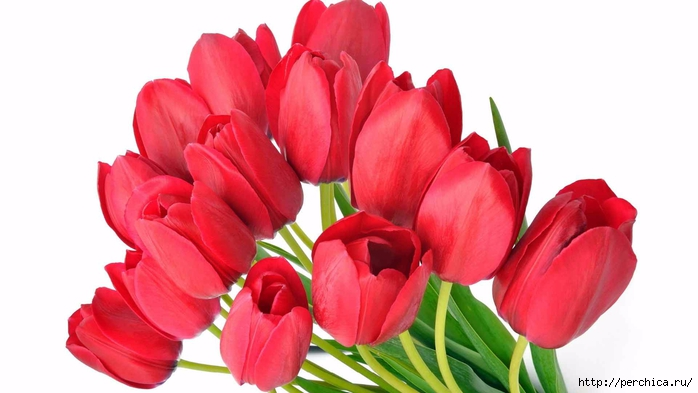 nature-landscapes_hdwallpaper_red-tulips_17785 (700x393, 156Kb)