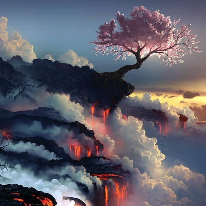 Цветущая сакура на краю вулкана.Япония (700x700, 107Kb)