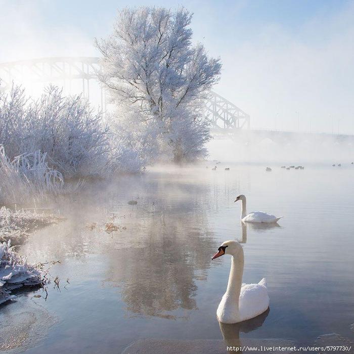 WinterLandscapes08 (700x700, 319Kb)