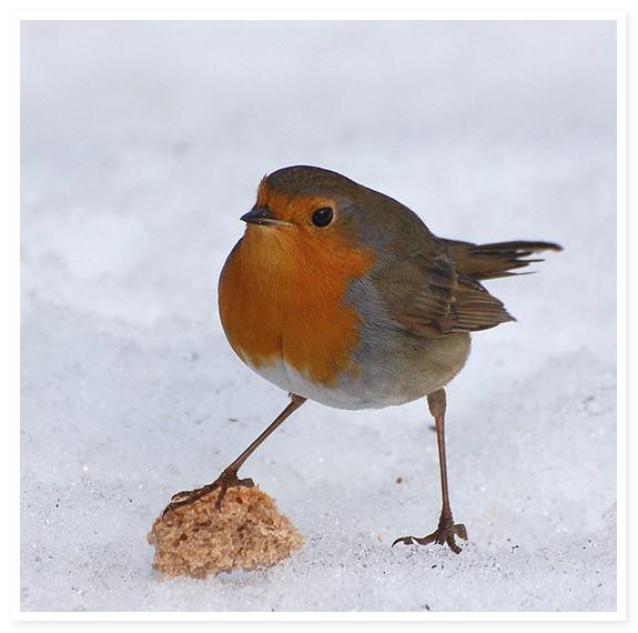 ptichka-zimoy (575x570, 72Kb)