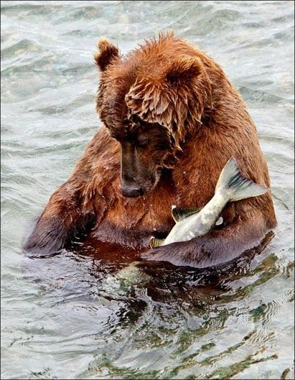funny-bears-06 (1) (426x549, 100Kb)