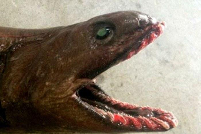 акула (700x467, 72Kb)