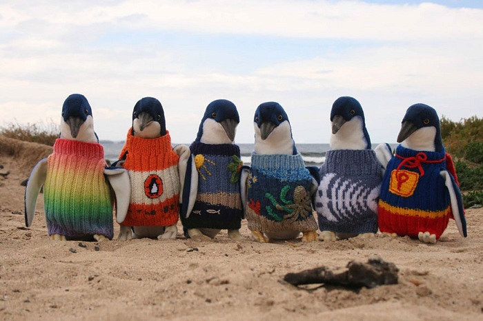 oldest-man-australia-knits-penguin-sweat (700x466, 108Kb)