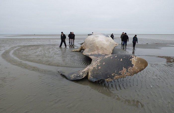 whale-70786525 (700x455, 45Kb)