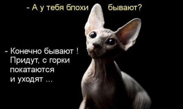 smeshnie_kartinki_142358398878 (600x359, 70Kb)