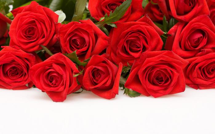 cvety-rozy-krasnye-belyy-fon-3657 (700x437, 356Kb)