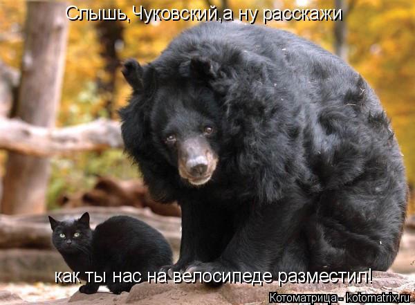 kotomatritsa_6u (600x441, 206Kb)