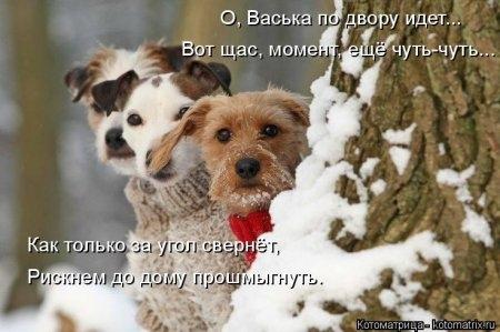 1416371958_kotomatritsa_fl (450x299, 90Kb)