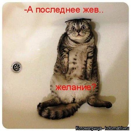 1416371981_kotomatritsa_7w (450x450, 95Kb)