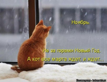 1416371986_kotomatritsa_sl (450x343, 76Kb)