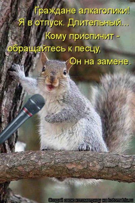 1416371993_kotomatritsa_tt (450x675, 203Kb)