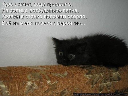 1416372028_kotomatritsa_yy (450x337, 84Kb)