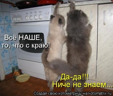 1416372033_kotomatritsa_nj (450x383, 95Kb)