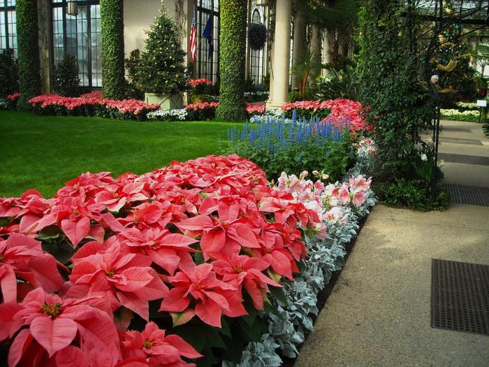 Longwood-Gardens-Pennsylvania-United-States (700x525, 565Kb)