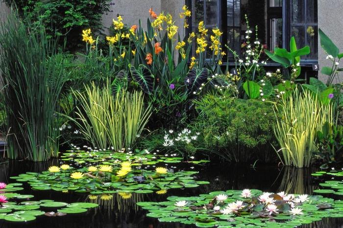 le-migliori-piante-acquatiche-per-il-giardino_a4654fd711a52178c296ea03fe4ea0af (700x466, 460Kb)