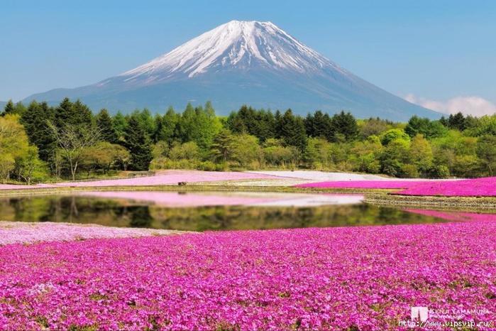 5745884_Park_Hicyjiyama_Yaponiya (700x466, 280Kb)
