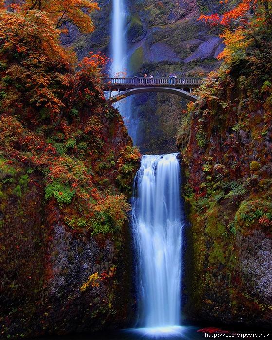 5745884_MaltnomaFols_shtat_Oregon (559x700, 443Kb)