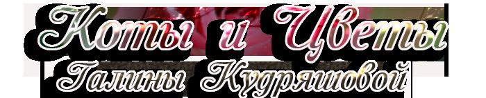 3166706_343565ki (700x142, 114Kb)
