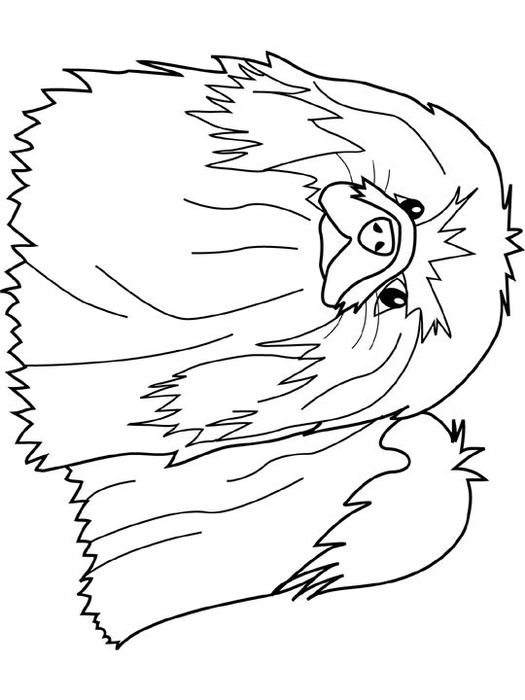 Dogs_coloring_pages_pekingese (525x700, 115Kb)