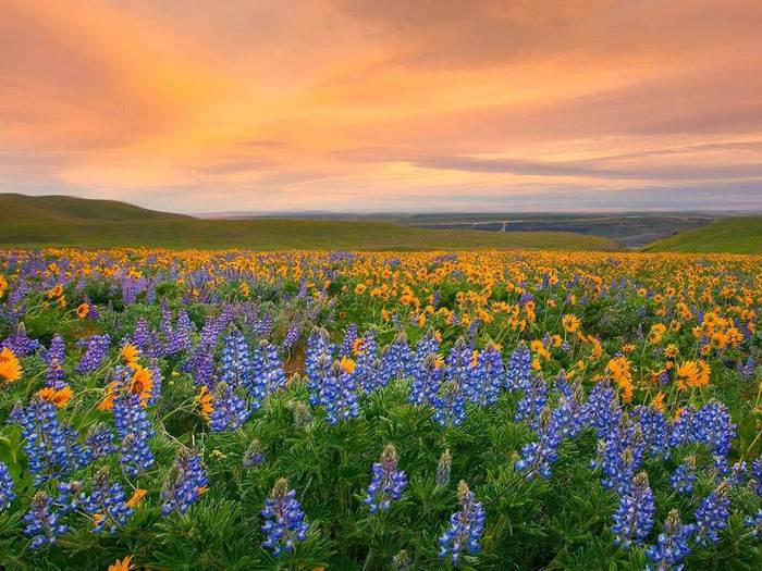 336974,xcitefun-valley-of-flowers-national-park-3 (700x525, 75Kb)