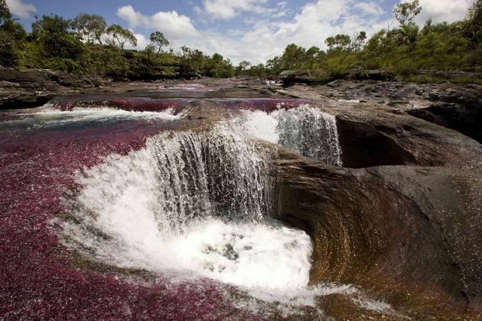Каньо Кристалес - самая красивая река в мире15 (700x466, 356Kb)